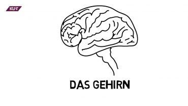 Das geheimnisvolle Gehirn