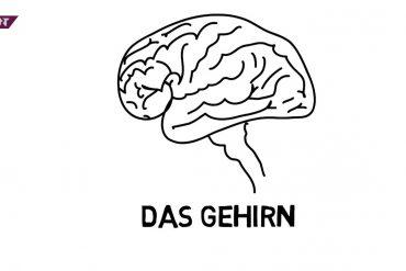 """Man kann es weder austauschen, noch spenden: das Gehirn. Die Reporter von """"KURT - Das Magazin"""" schauen sich das Organ genauer an. Was passiert, wenn das Gehirn nicht mehr richtig funktioniert oder wenn ein Säugling ganz ohne Gehirn auf die Welt kommt? Dafür sprechen Studierende der TU Dortmund mit Hans Joachim Kivelip, der an Demenz erkrankt ist. Außerdem begleiten sie die schwangere Silke Böhm und ihre Familie. Das im Mutterleib heranwachsende Kind leidet an einer Entwicklungsstörung, bei der sich kein Gehirn bildet."""