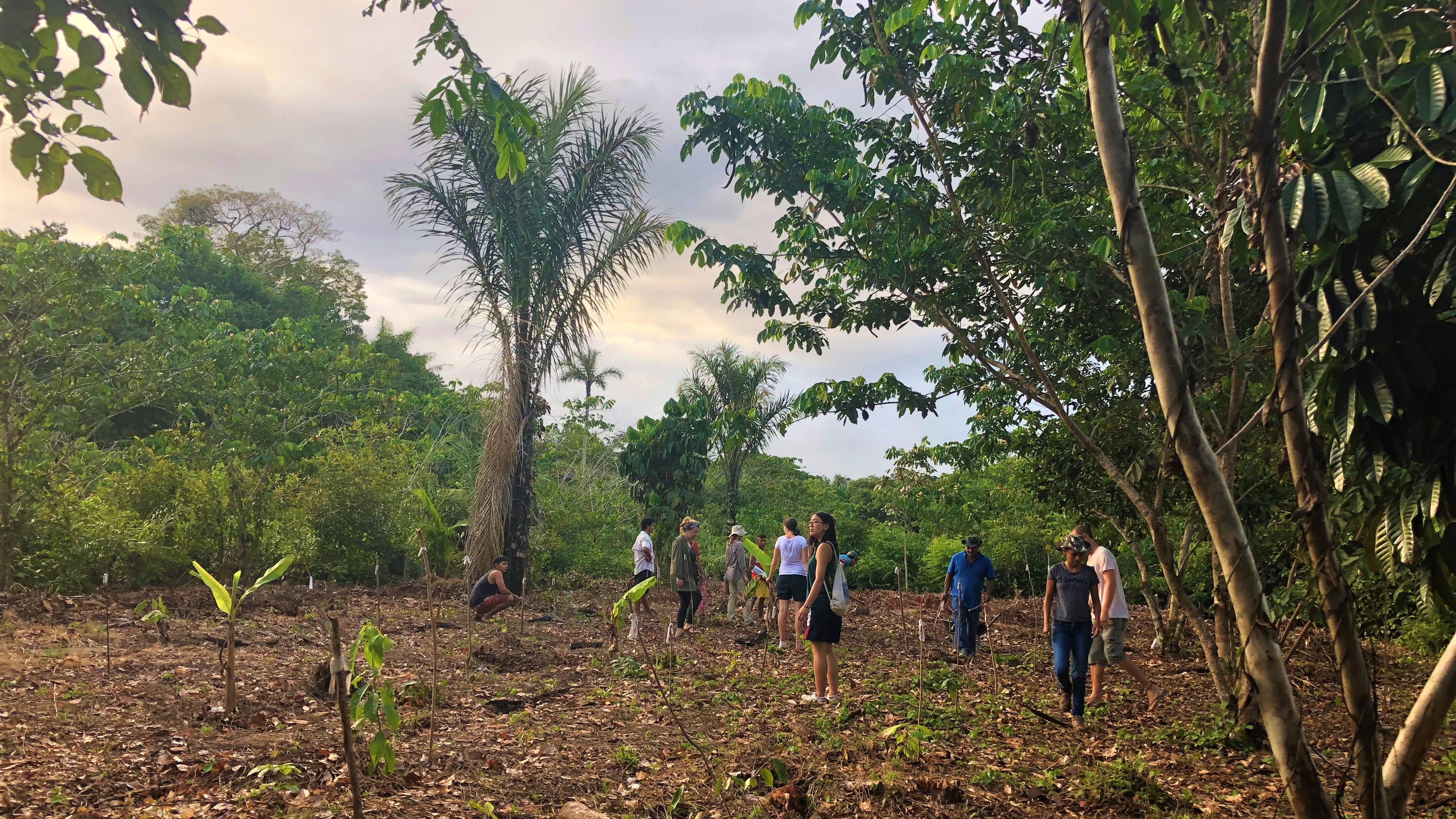 Die Landwirtschaft hat bereits einen großen Teil des Regenwaldes zerstört. Eine nachhaltige Methode soll das nun ändern: der Agroforst.